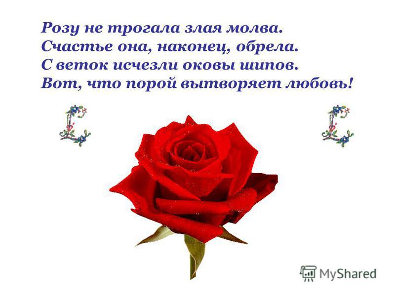 Розу не трогала злая молва. Счастье она, наконец, обрела. С веток исчезли оковы шипов. Вот, что порой вытворяет любовь!