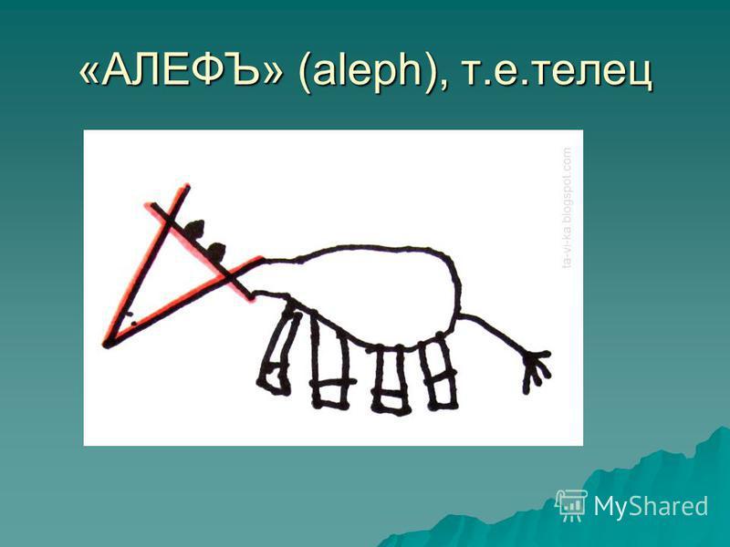 «АЛЕФЪ» (aleph), т.е.телец