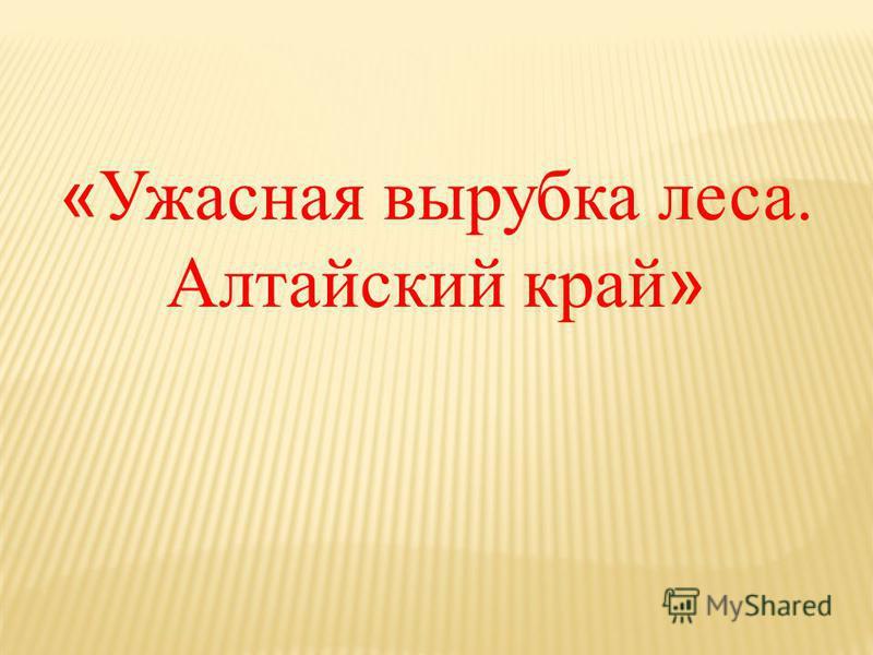 « Ужасная вырубка леса. Алтайский край »