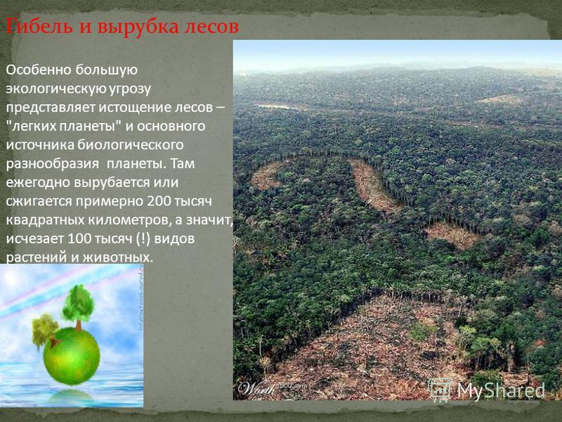 Гибель и вырубка лесов Особенно большую экологическую угрозу представляет истощение лесов –