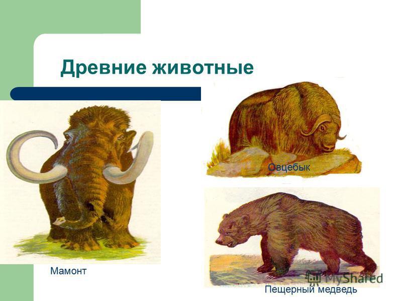 Древние животные Мамонт Овцебык Пещерный медведь