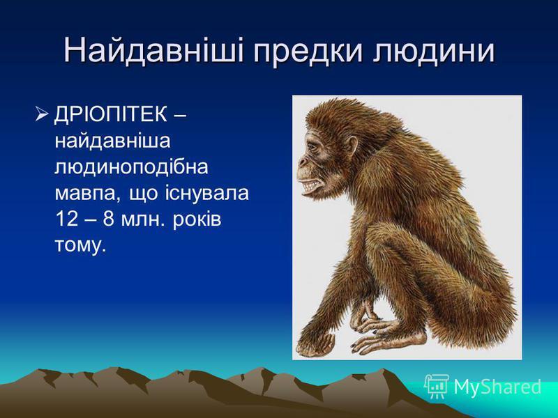 Найдавніші предки людини ДРІОПІТЕК – найдавніша людиноподібна мавпа, що існувала 12 – 8 млн. років тому.