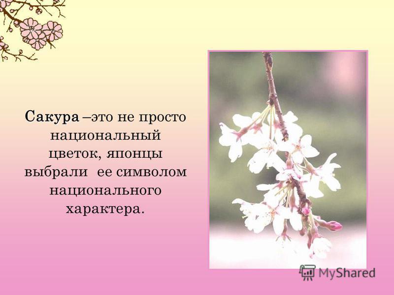 Сакура Сакура –это не просто национальный цветок, японцы выбрали ее символом национального характера.