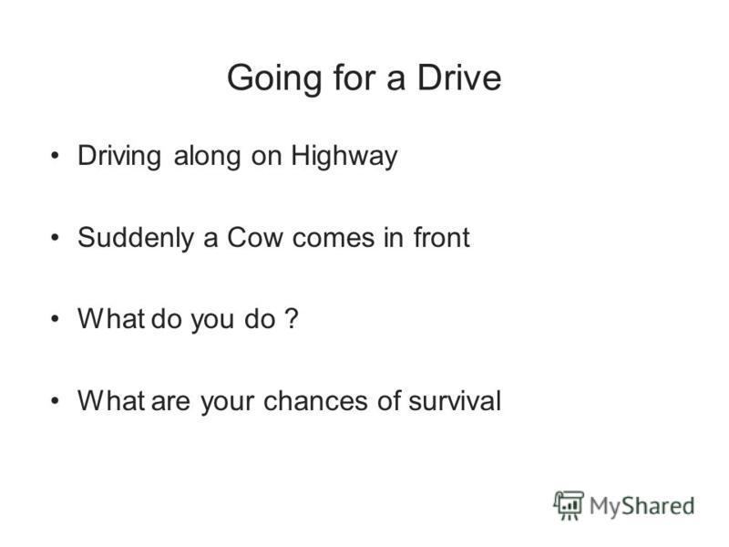 Going for a Drive Driving along on Highway Suddenly a Cow comes in front What do you do ? What are your chances of survival