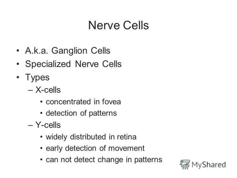 Nerve Cells A.k.a. Ganglion Cells Specialized Nerve Cells Types –X-cells concentrated in fovea detection of patterns –Y-cells widely distributed in retina early detection of movement can not detect change in patterns