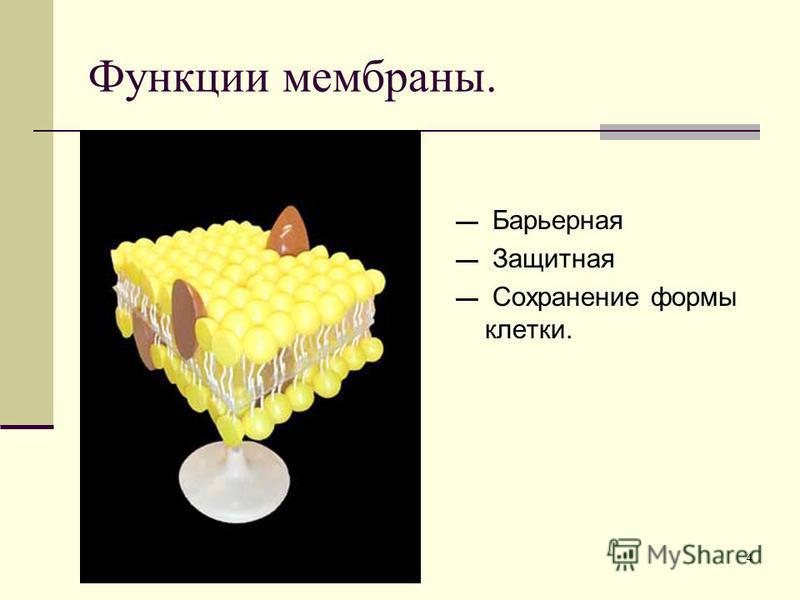 4 Барьерная Защитная Сохранение формы клетки. Функции мембраны.