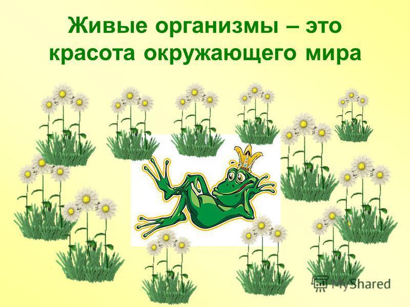 Живые организмы – это красота окружающего мира