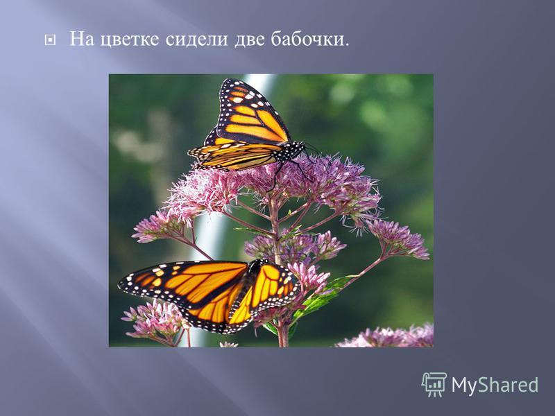 На цветке сидели две бабочки.