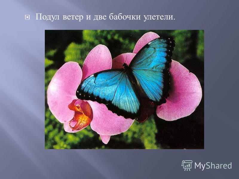 Подул ветер и две бабочки улетели.