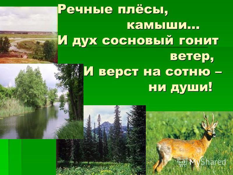 Речные плёсы, камыши… И дух сосновый гонит ветер, И верст на сотню – ни души! Речные плёсы, камыши… И дух сосновый гонит ветер, И верст на сотню – ни души!
