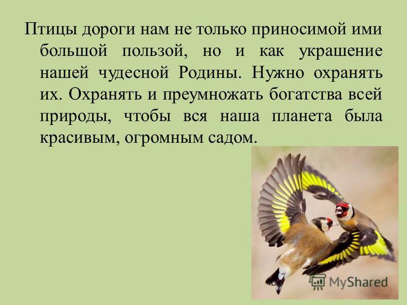 Птицы дороги нам не только приносимой ими большой пользой, но и как украшение нашей чудесной Родины. Нужно охранять их. Охранять и преумножать богатства всей природы, чтобы вся наша планета была красивым, огромным садом.
