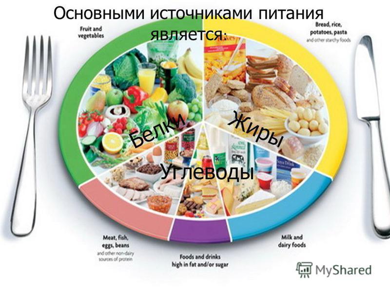Основными источниками питания является : Белки Жиры Углеводы