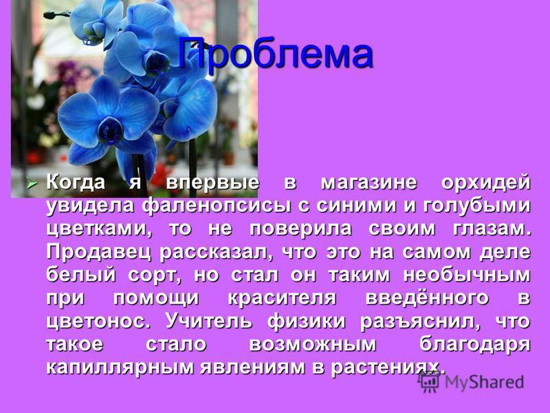Проблема Когда я впервые в магазине орхидей увидела фаленопсисы с синими и голубыми цветками, то не поверила своим глазам. Продавец рассказал, что это на самом деле белый сорт, но стал он таким необычным при помощи красителя введённого в цветонос. Уч