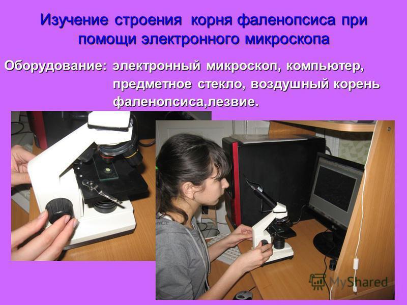 Изучение строения корня фаленопсиса при помощи электронного микроскопа Оборудование: электронный микроскоп, компьютер, предметное стекло, воздушный корень предметное стекло, воздушный корень фаленопсиса,лезвие. фаленопсиса,лезвие.