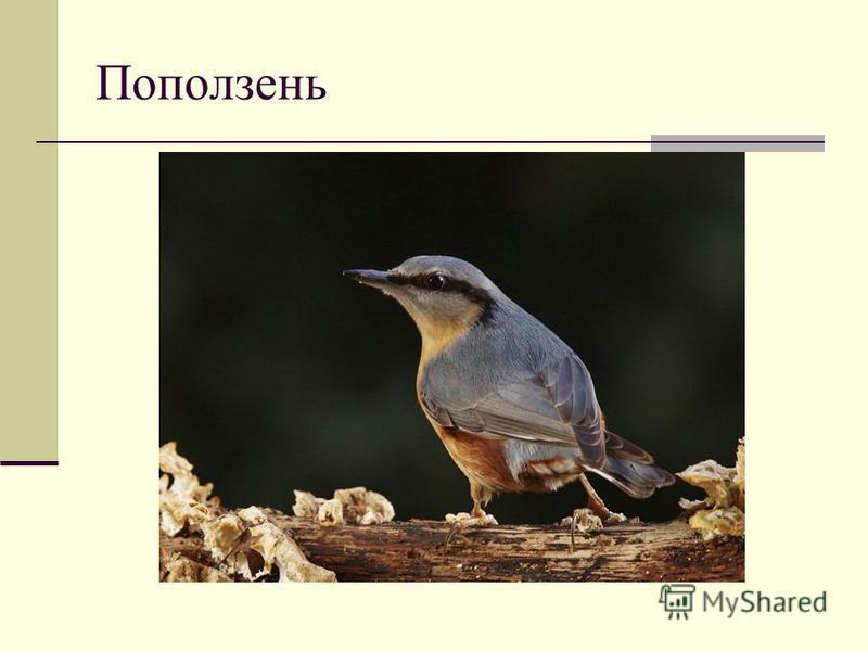 Что для этих птиц общее?