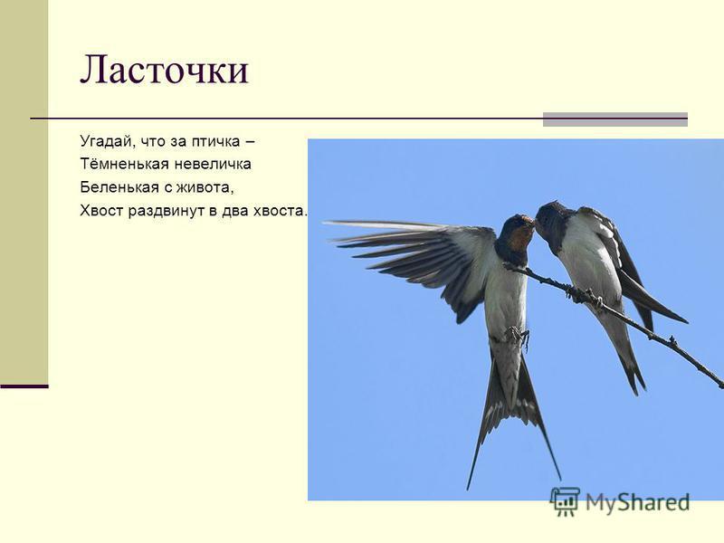 Грач Что за весенняя чёрная птица Любит за пугалом ходить и кормится? Что за весенняя чёрная птица Прямо на трактор чуть не садится?