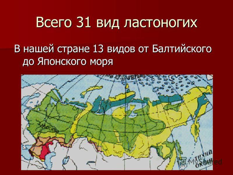 Всего 31 вид ластоногих В нашей стране 13 видов от Балтийского до Японского моря