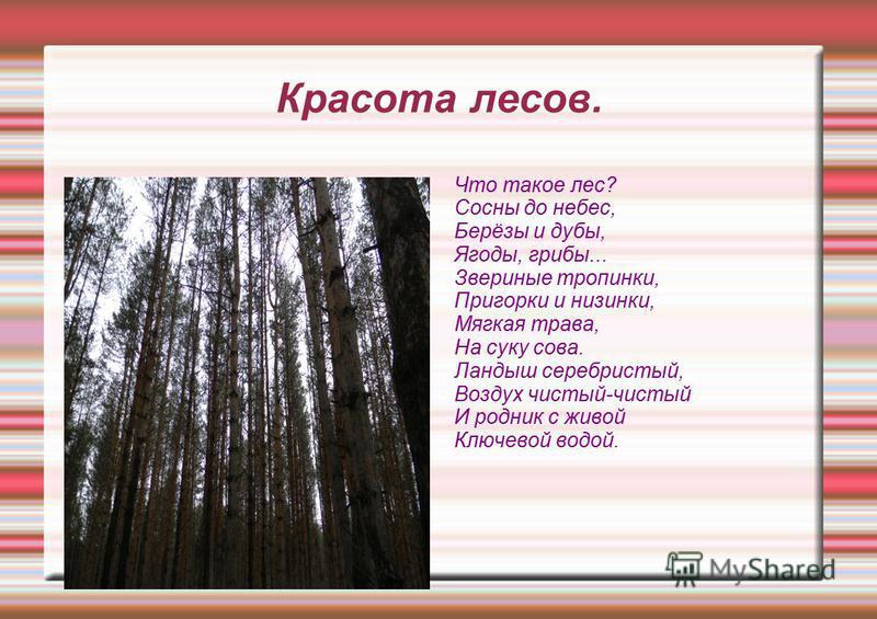 Красота лесов. Что такое лес? Сосны до небес, Берёзы и дубы, Ягоды, грибы... Звериные тропинки, Пригорки и низинки, Мягкая трава, На суку сова. Ландыш серебристый, Воздух чистый-чистый И родник с живой Ключевой водой.