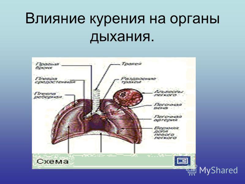 Влияние курения на органы дыхания.