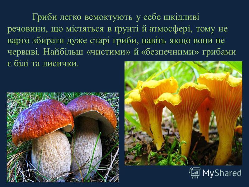 Гриби легко всмоктують у себе шкідливі речовини, що містяться в ґрунті й атмосфері, тому не варто збирати дуже старі гриби, навіть якщо вони не червиві. Найбільш «чистими» й «безпечними» грибами є білі та лисички.