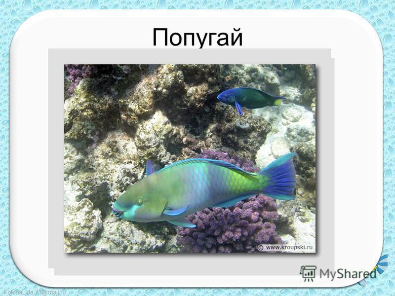 FokinaLida.75@mail.ru Попугай