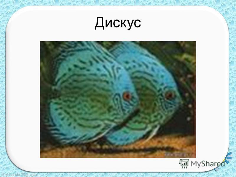 FokinaLida.75@mail.ru Дискус