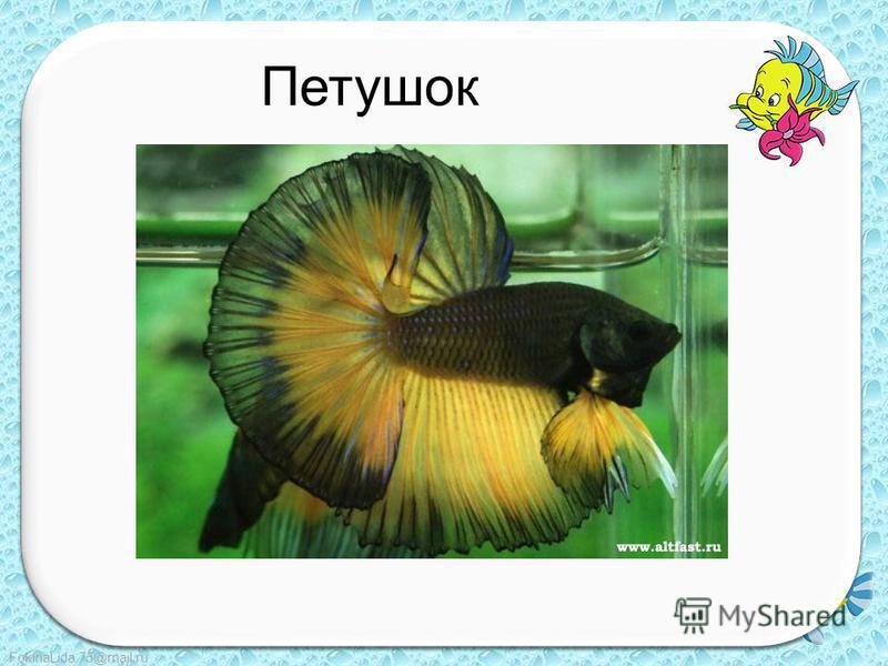FokinaLida.75@mail.ru Петушок