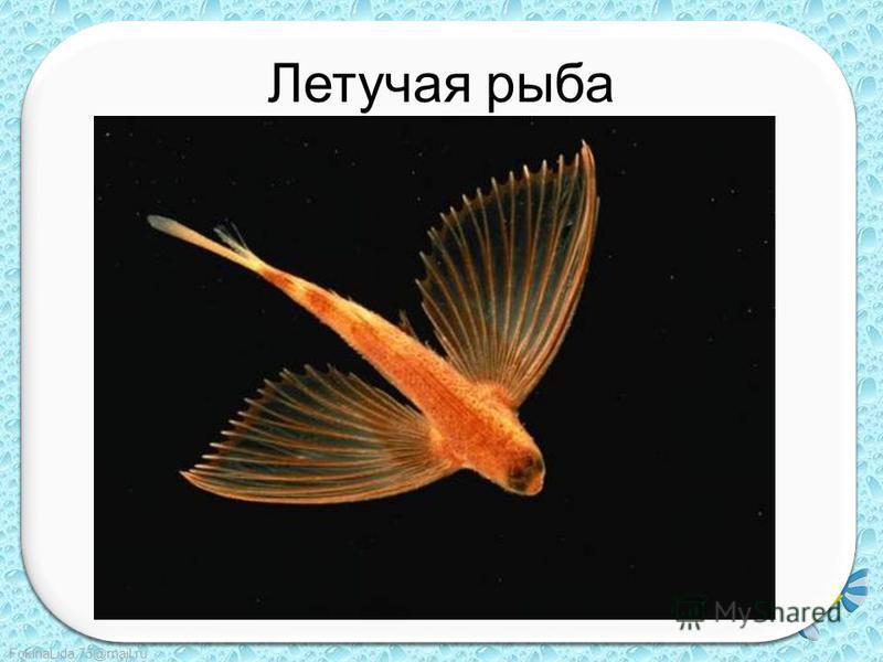 FokinaLida.75@mail.ru Летучая рыба