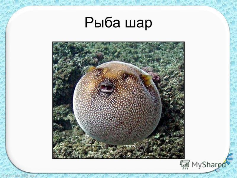 FokinaLida.75@mail.ru Рыба шар