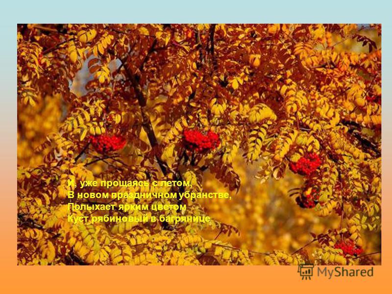 И, уже прощаясь с летом, В новом праздничном убранстве, Полыхает ярким цветом Куст рябиновый в багрянице