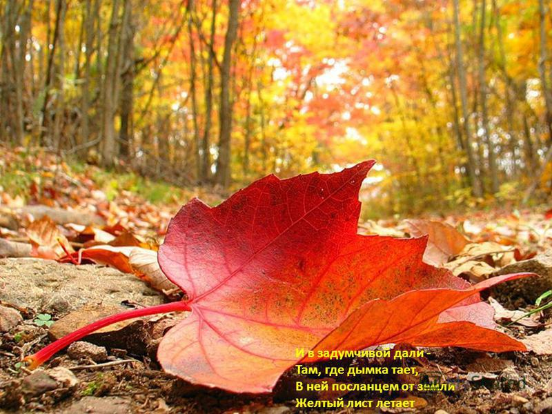 И в задумчивой дали - Там, где дымка тает, В ней посланцем от земли Желтый лист летает