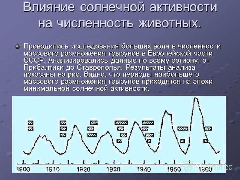 Влияние солнечной активности на численность животных. Проводились исследования больших волн в численности массового размножения грызунов в Европейской части СССР. Анализировались данные по всему региону, от Прибалтики до Ставрополья. Результаты анали