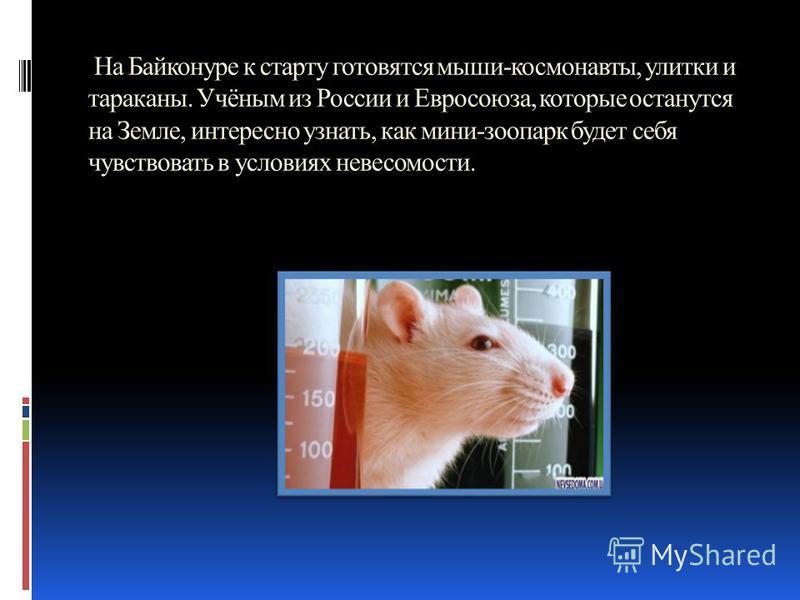 На Байконуре к старту готовятся мыши-космонавты, улитки и тараканы. Учёным из России и Евросоюза, которые останутся на Земле, интересно узнать, как мини-зоопарк будет себя чувствовать в условиях невесомости.