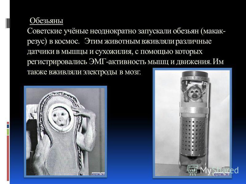Обезьяны Советские учёные неоднократно запускали обезьян (макак- резус) в космос. Этим животным вживляли различные датчики в мышцы и сухожилия, с помощью которых регистрировались ЭМГ-активность мышц и движения. Им также вживляли электроды в мозг.