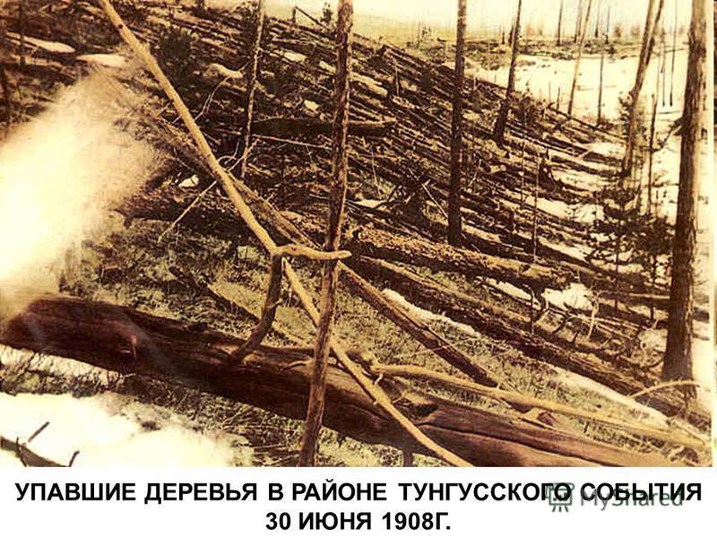 УПАВШИЕ ДЕРЕВЬЯ В РАЙОНЕ ТУНГУССКОГО СОБЫТИЯ 30 ИЮНЯ 1908Г.