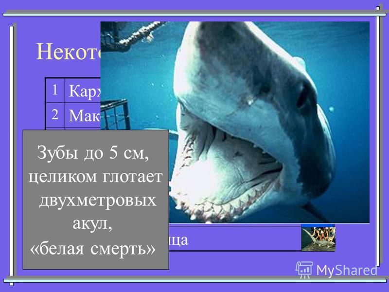 Некоторые представители акул 1 Кархарадон (Большая белая) 2 Мако (Серо-голубая) 3 Китовая 4 Тигровая 5 Катран (Колючая) 6 Акула-молот 7Морская лисица Зубы до 5 см, целиком глотает двухметровых акул, «белая смерть»