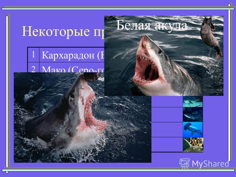 Некоторые представители акул 1 Кархарадон (Большая белая) 2 Мако (Серо-голубая) 3 Китовая 4 Тигровая 5 Катран (Колючая) 6 Акула-молот 7Морская лисица Белая акула