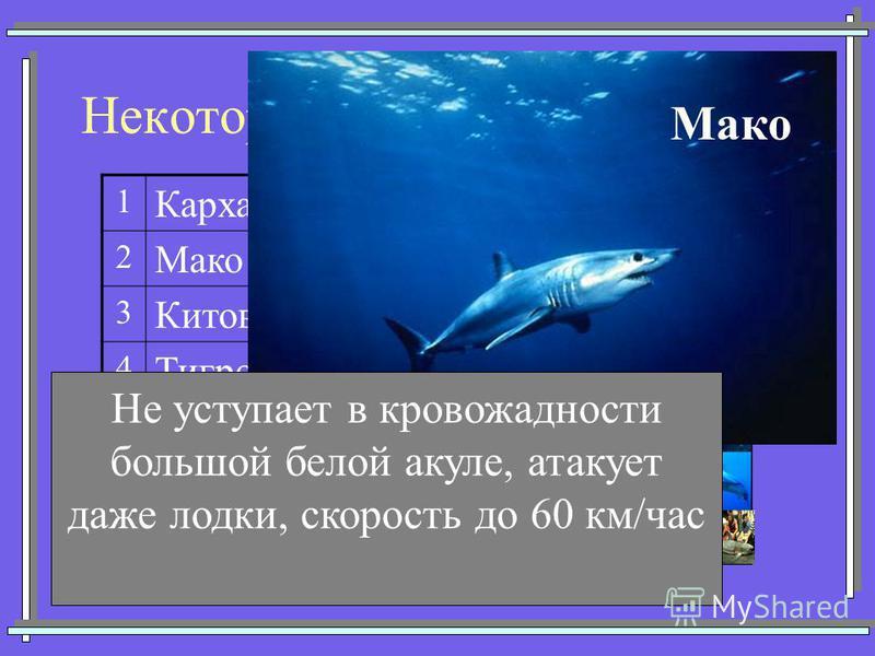 Некоторые представители акул 1 Кархарадон (Большая белая) 2 Мако (Серо-голубая) 3 Китовая 4 Тигровая 5 Катран (Колючая) 6 Акула-молот 7Морская лисица Мако Не уступает в кровожадности большой белой акуле, атакует даже лодки, скорость до 60 км/час