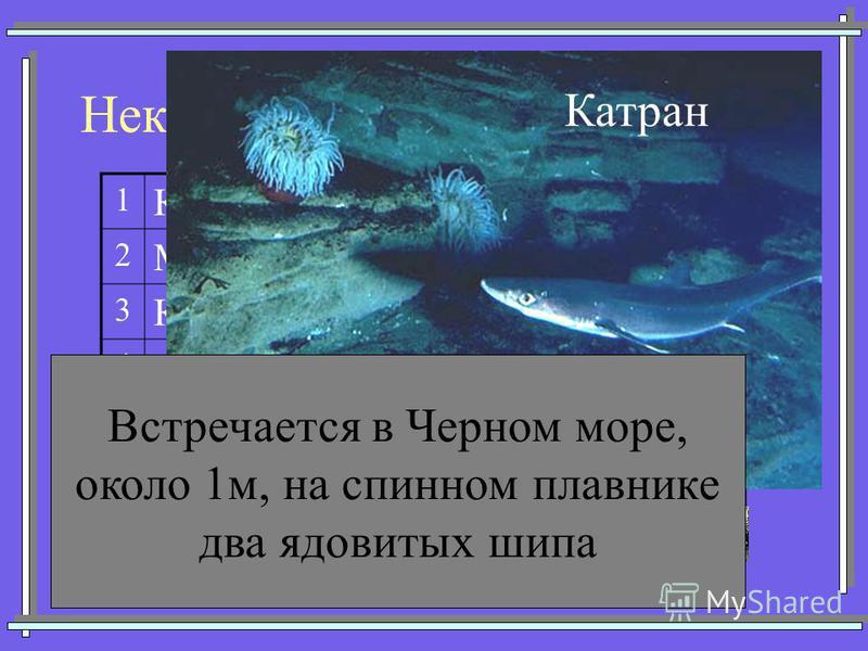 Некоторые представители акул 1 Кархарадон (Большая белая) 2 Мако (Серо-голубая) 3 Китовая 4 Тигровая 5 Катран (Колючая) 6 Акула-молот 7Морская лисица Катран Встречается в Черном море, около 1 м, на спинном плавнике два ядовитых шипа
