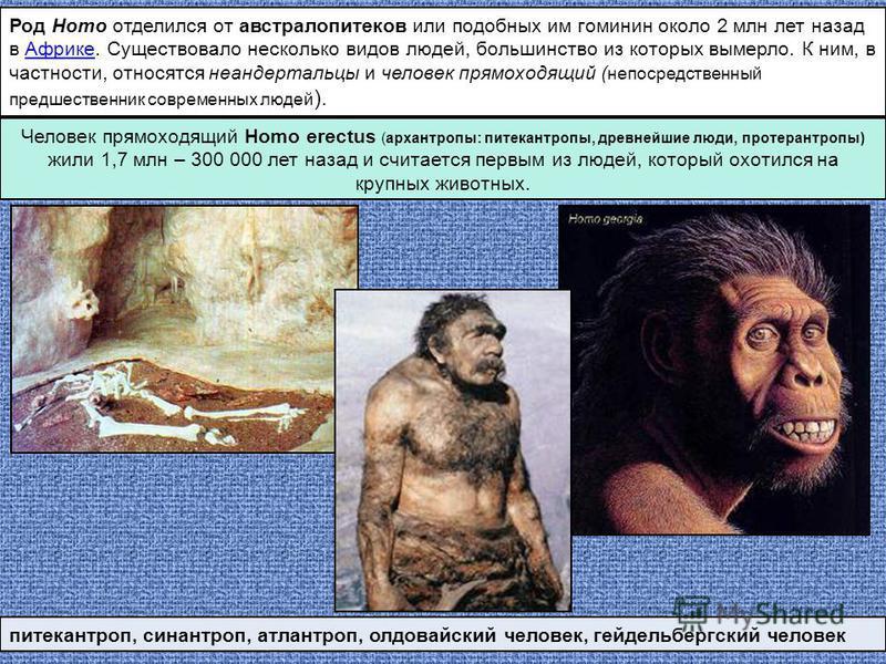 Род Homo отделился от австралопитеков или подобных им гоминин около 2 млн лет назад в Африке. Существовало несколько видов людей, большинство из которых вымерло. К ним, в частности, относятся неандертальцы и человек прямоходящийй ( непосредственный п