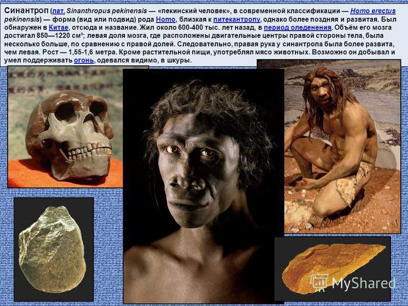 Синантроп (лат. Sinanthropus pekinensis «пекинский человек», в современной классификации Homo erectus pekinensis) форма (вид или подвид) рода Homo, близкая к питекантропу, однако более поздняя и развитая. Был обнаружен в Китае, отсюда и название. Жил