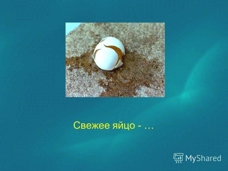 Свежее яйцо - …