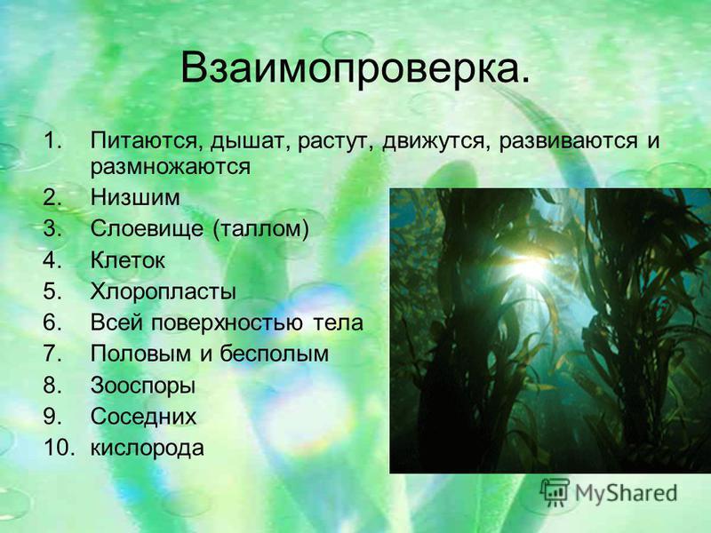 Взаимопроверка. 1.Питаются, дышат, растут, движутся, развиваются и размножаются 2. Низшим 3. Слоевище (таллом) 4. Клеток 5. Хлоропласты 6. Всей поверхностью тела 7. Половым и бесполым 8. Зооспоры 9. Соседних 10.кислорода