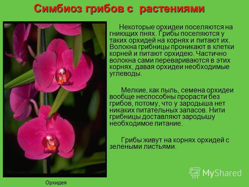 Некоторые орхидеи поселяются на гниющих пнях. Грибы поселяются у таких орхидей на корнях и питают их. Волокна грибницы проникают в клетки корней и питают орхидею. Частично волокна сами перевариваются в этих корнях, давая орхидеи необходимые углеводы.