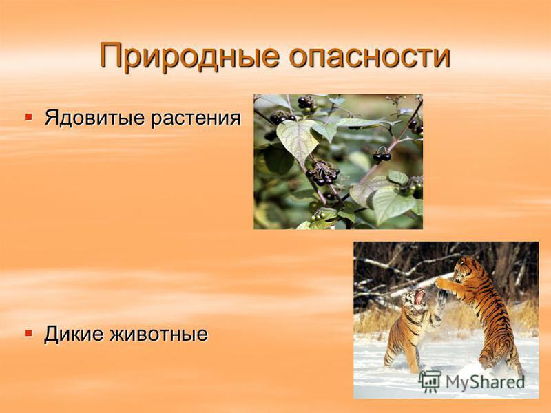 Природные опасности Ядовитые растения Ядовитые растения Дикие животные Дикие животные
