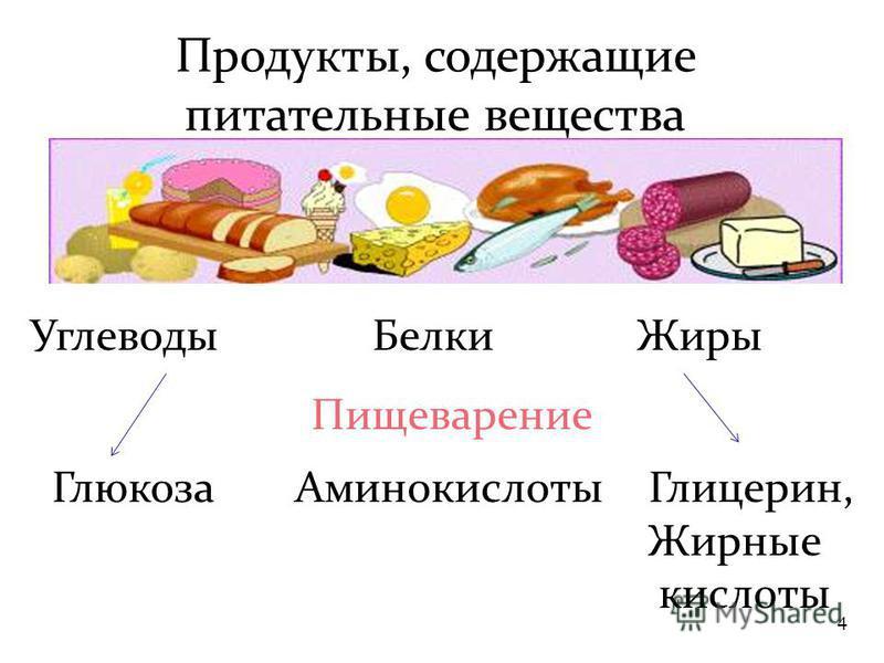 4 Продукты, содержащие питательные вещества Углеводы Белки Жиры Глюкоза АминокислотыГлицерин, Жирные кислоты Пищеварение