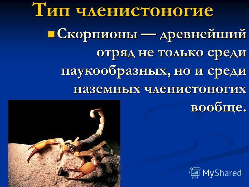 Тип членистоногие Тип членистоногие Скорпионы древнейший отряд не только среди паукообразных, но и среди наземных членистоногих вообще. Скорпионы древнейший отряд не только среди паукообразных, но и среди наземных членистоногих вообще.