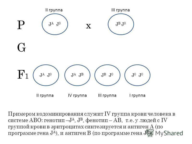Примером кодоминирования служит IV группа крови человека в системе АВО: генотип –J A, J B, фенотип – АВ, т.е. у людей с IV группой крови в эритроцитах синтезируется и антиген А (по программе гена J A ), и антиген В (по программе гена J B ). Р х II гр
