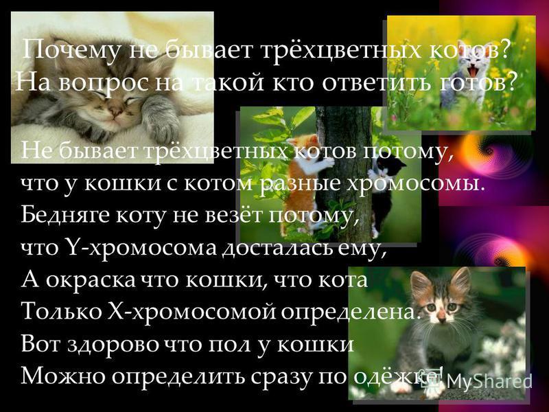 Почему не бывает трёхцветных котов? На вопрос на такой кто ответить готов? Не бывает трёхцветных котов потому, что у кошки с котом разные хромосомы. Бедняге коту не везёт потому, что Y-хромосома досталась ему, А окраска что кошки, что кота Только Х-х