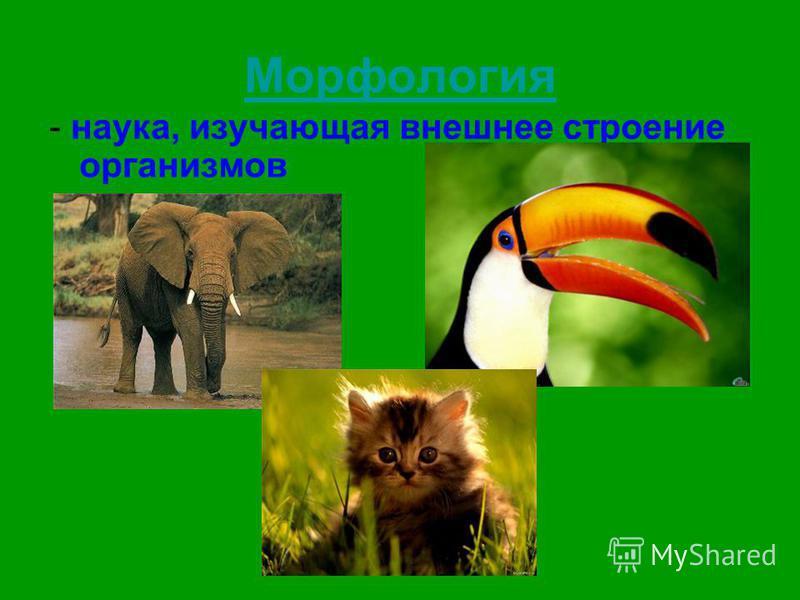Морфология - наука, изучающая внешнее строение организмов